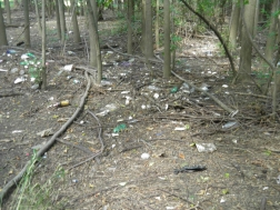 Bottles, debris deposited in field from high Creek flows