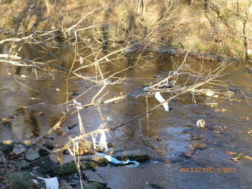 Stream trash caught in branches - upstream of Whitaker Ave Bridge - south bank