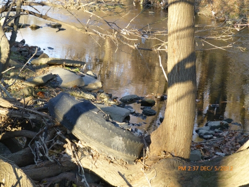 Tire caught in tree - south side bank - upstream of Whitaker Ave Bridge