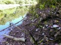 Tacony Creek Trash, Downstream Whitaker Ave, Left Side