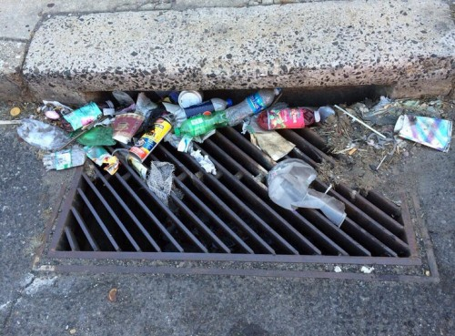A_doley_litter_pic